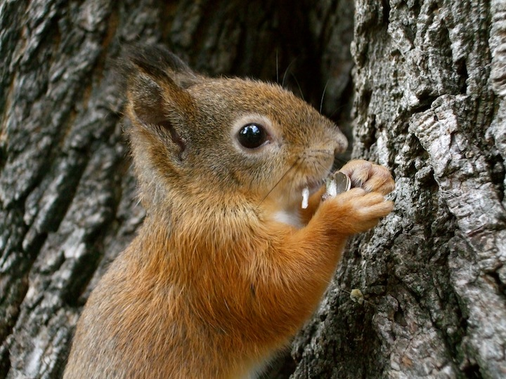 Cute baby squirrel eating seeds