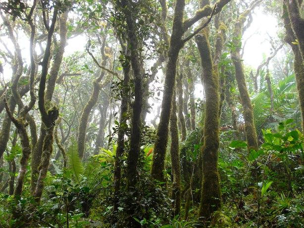 Elyunque rainforest in Puerto Rico