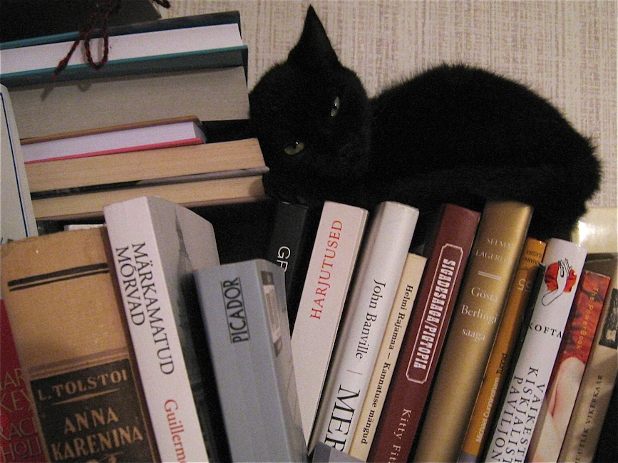 Black cat on the bookshelf. Her name is Oscar.