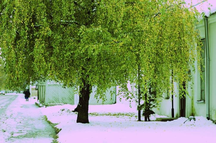 Autumn-Winter. Birch tree in Kaera street. Green on white.