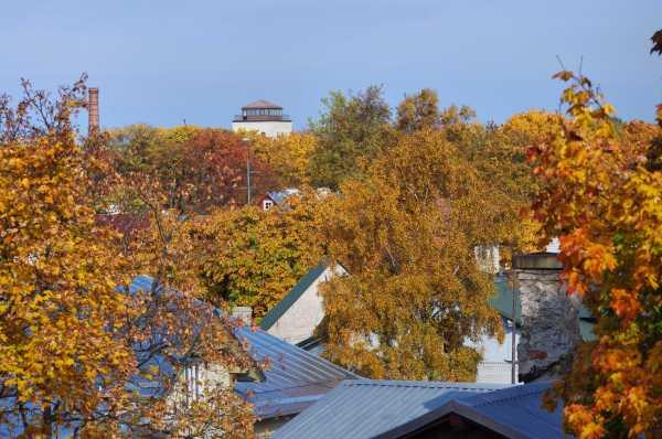 Kalamaja roofs