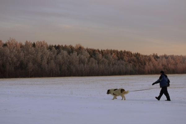 Country life in Estonia