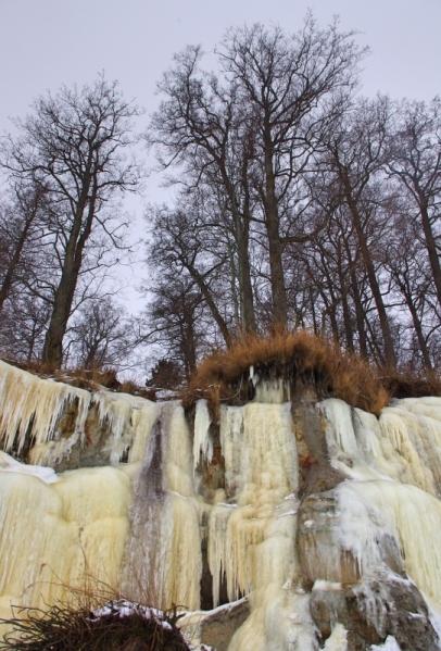 Frozen tree roots