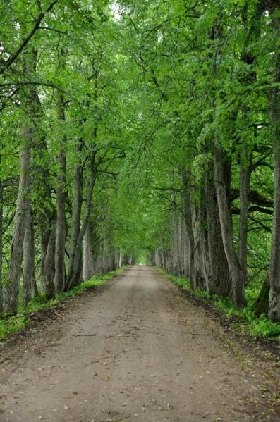 Road to Lake Saare, Jõgeva County