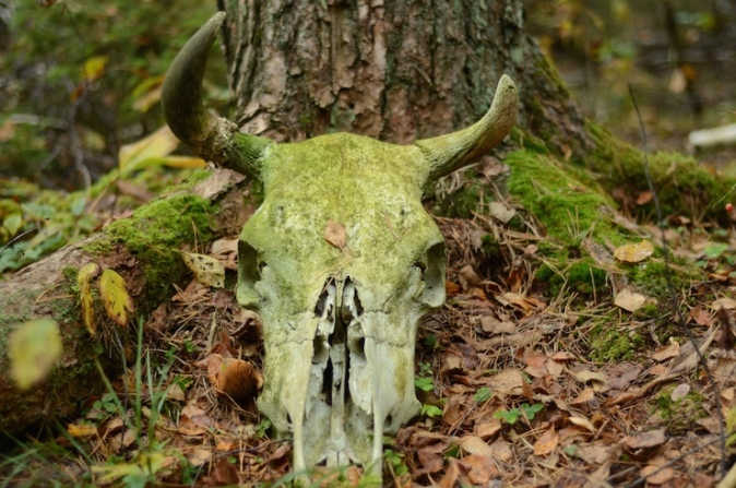 A skull in the forest